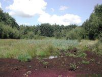 Großes Moorbecken